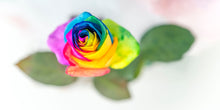 "Afbeelding in Gallery-weergave laden, PRW-011  ""Rainbow Rose"" BLOOM COLLECTIE  Foto Print"