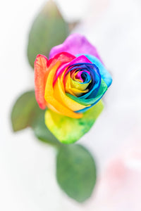 "PRW-012  ""Rainbow Rose"" BLOOM COLLECTIE  Foto Print"