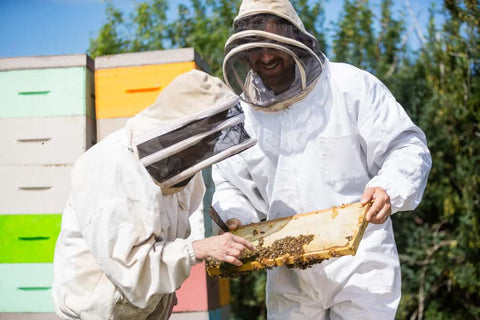 Beekeepers Inspecting Honeycomb Frame - Apitherapy
