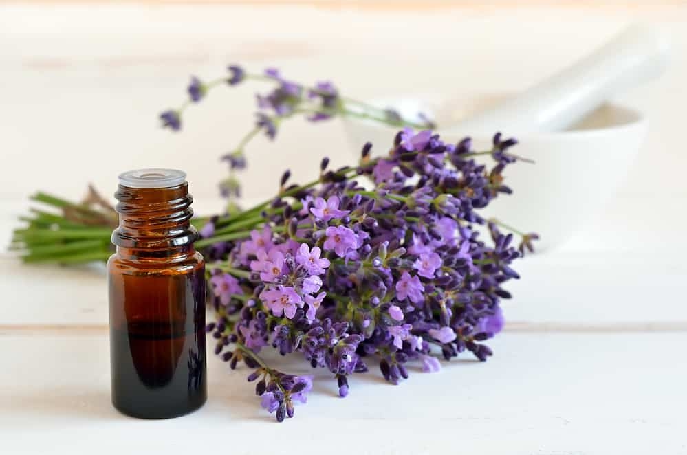 Essential lavender oil in a dark glass bottle decorated with a bunch of freshly gathered lavender flowers