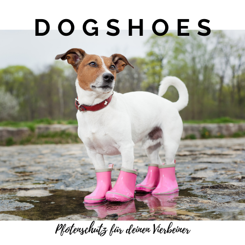 DogShoes