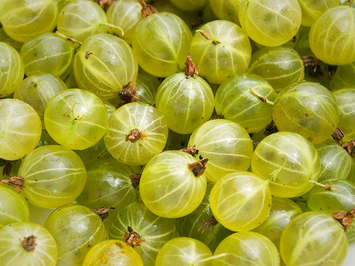 Different Types of Gooseberries