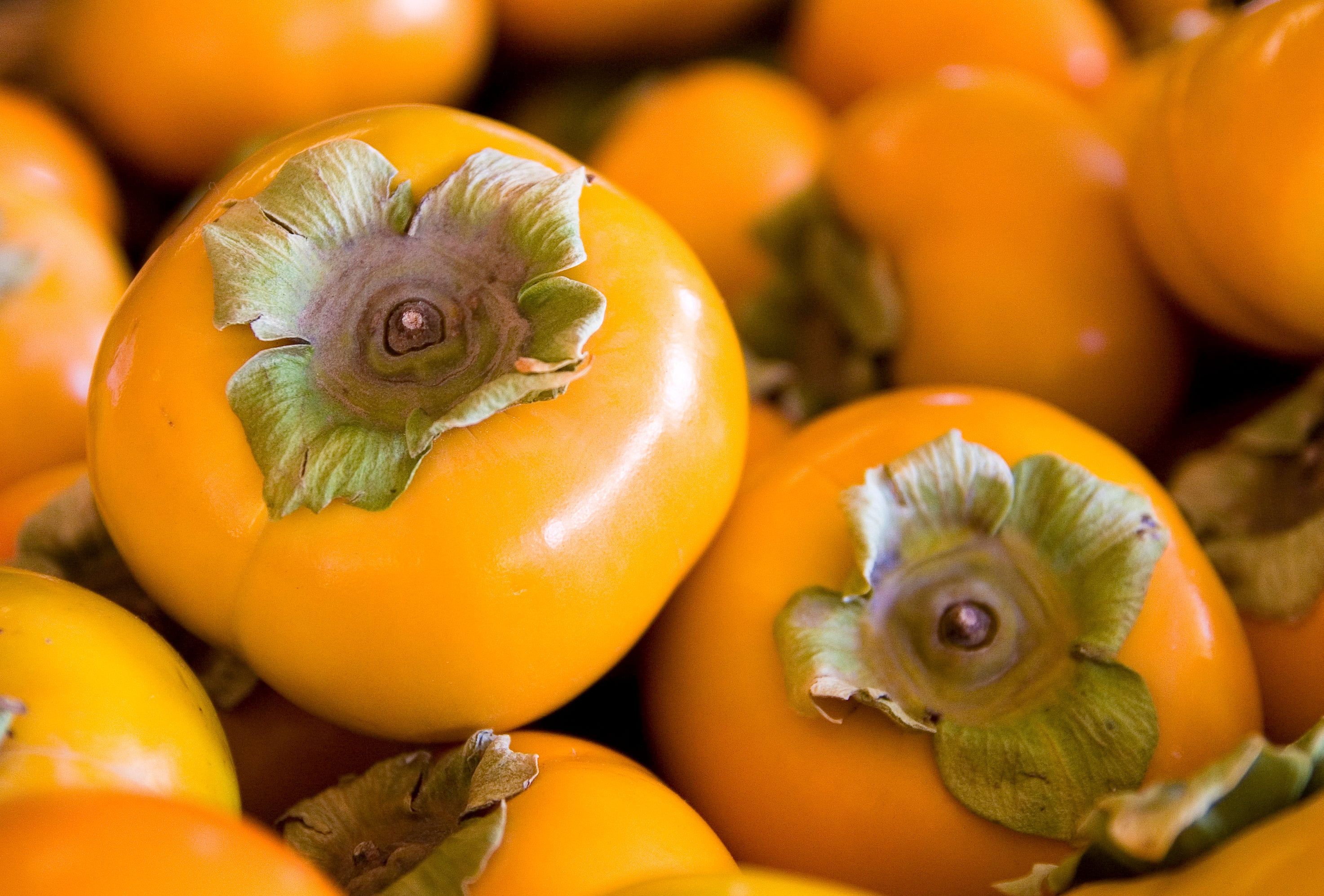 Different Types of Persimmons