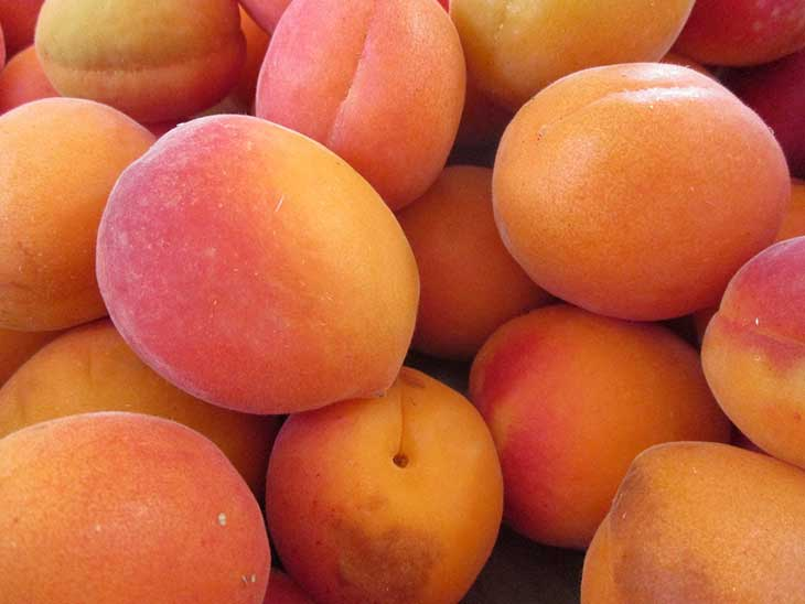 Different Types of Apricots