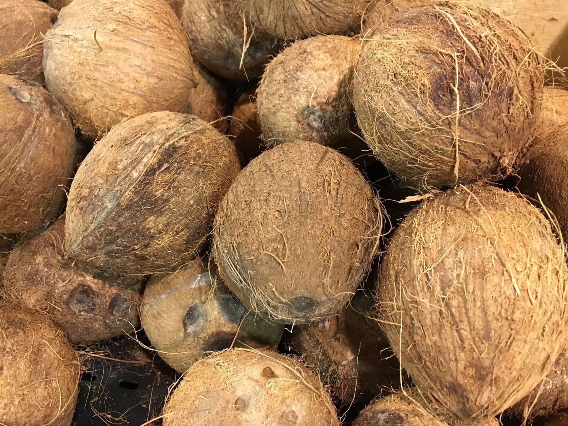 The History (And Mystery) of the Crazy Coconut