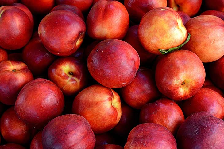 Different Types of Nectarines