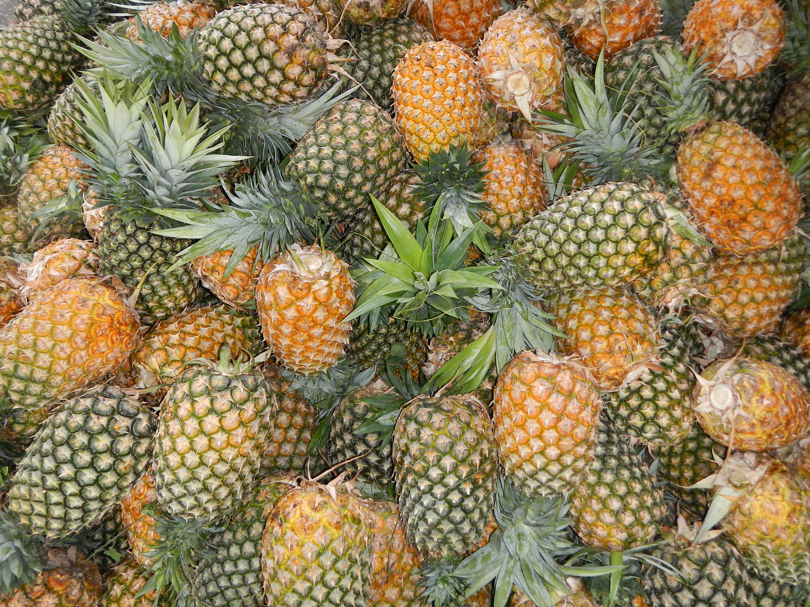 Different Types of Pineapple
