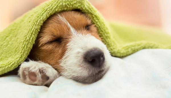 HOW TO KEEP YOUR DOG CLEAN AND HEALTHY
