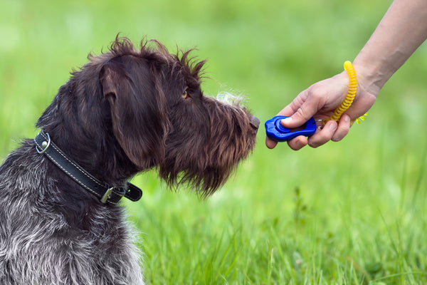 WHAT IS DOG MARKER TRAINING?