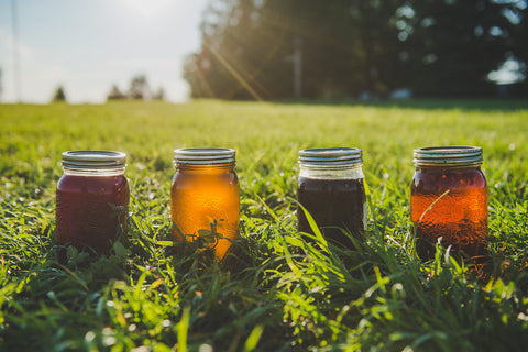 four mason jars of herb-infused oils sit in the grass on the sunshine. Each jar is a different colour, depending on the herbs they're infused with.