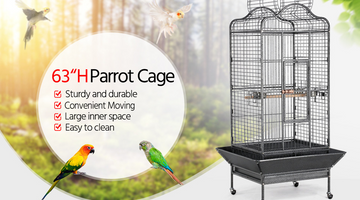 6 Must-Know Birdcage Buying Tips