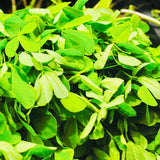 Menthulu-FenuGreek Seeds 1 Kg Packs