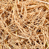 Scented Rice Paddy Seeds-3S-Sun Sugandha-1 Kg Pack