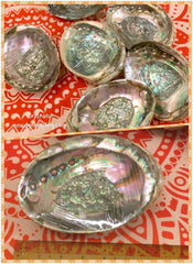 Abalone Shell XL size ;  estimated 140~145mm Length