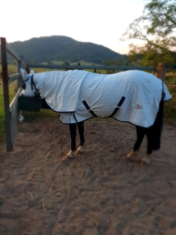 Queensland Itch - how to help my horse with QLD Itch