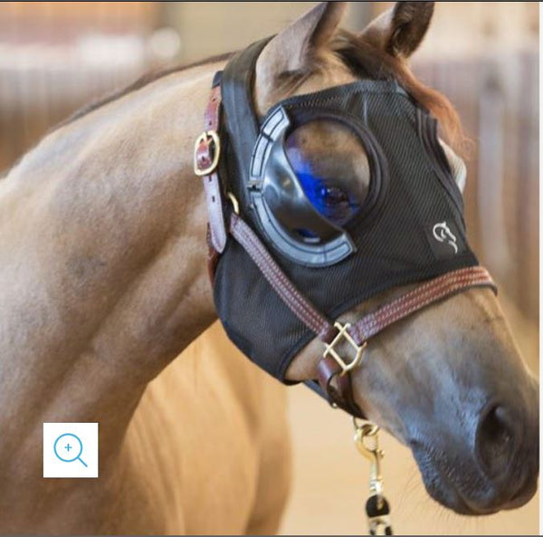 Equilume Light Therapy for Maintenance of Summer Coat