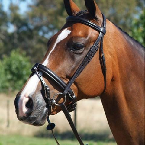 Grainge Bridles Warmblood / Havana Grainge Elite Dressage Snaffle Bridle