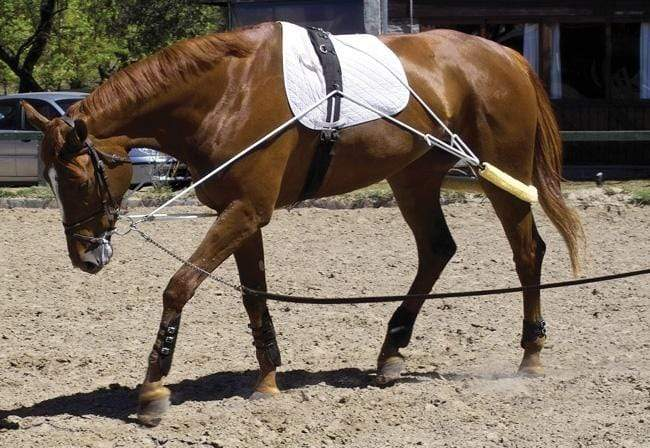 Pessoa Lunge Training System - Gympie Saddleworld & Country Clothing