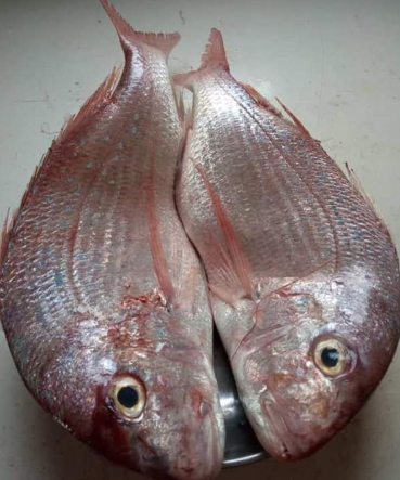 Red Fish (per kg)