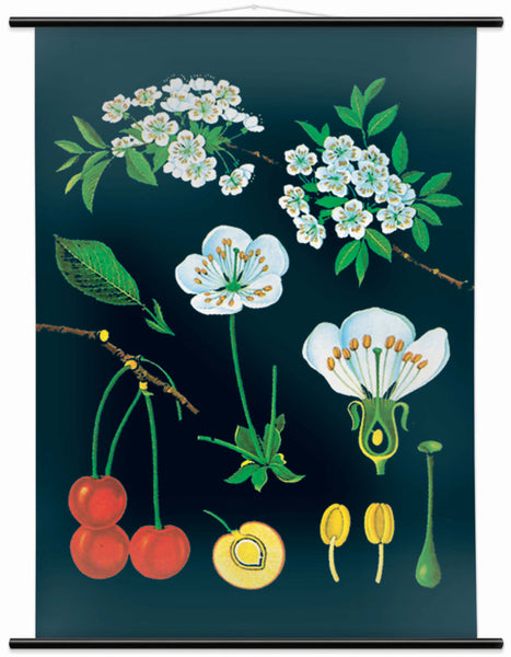 The small Cherry Tree Wall Chart