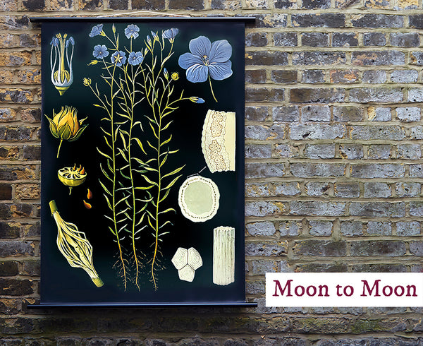 Interior design Ideas Moon to Moon