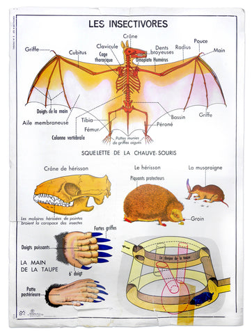 VINTAGE FRENCH BAT & HEDGEHOG CHART