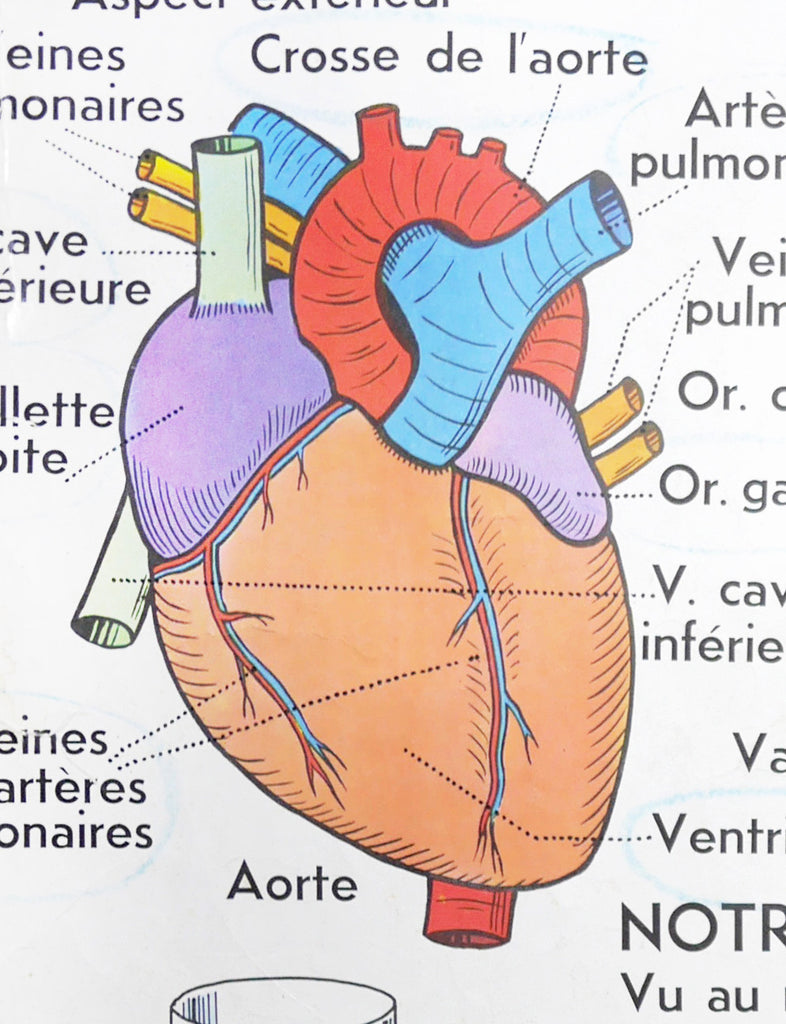 human heart chart images: French heart chart