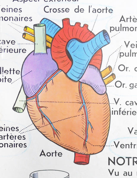 VINTAGE FRENCH HEART CHART