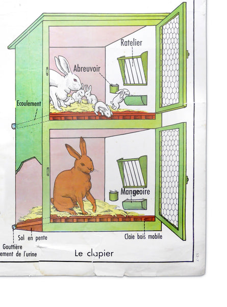 VINTAGE FRENCH RABBIT CHART