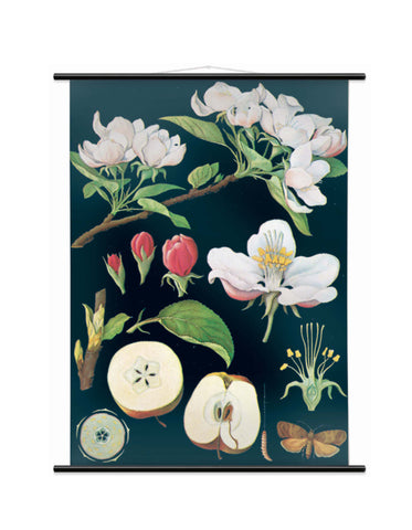 APPLE TREE WALL CHART - SMALL