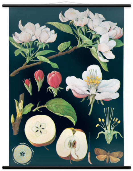 APPLE TREE WALL CHART