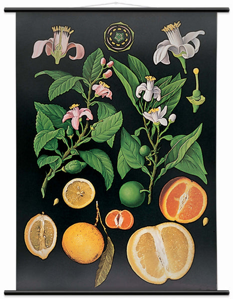 Citrus Fruit Wall Chart