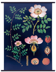 The Large Dog Rose Wall Chart