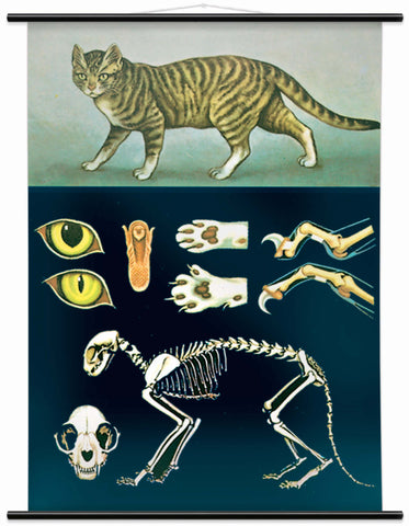 DOMESTIC CAT WALL CHART