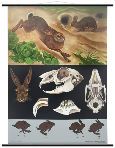 HARE & RABBIT WALL CHART