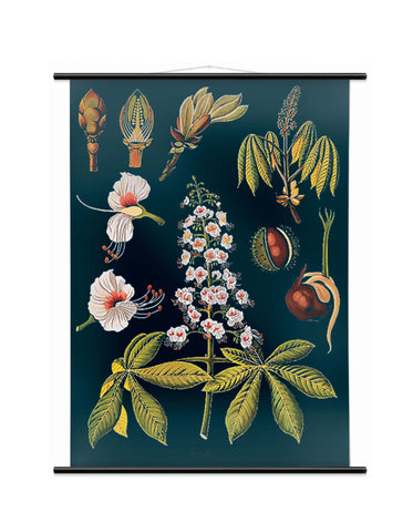HORSE CHESTNUT WALL CHART - SMALL