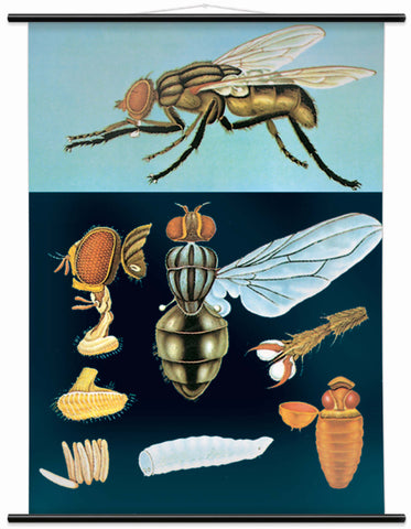 HOUSE FLY WALL CHART