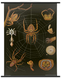 SPIDER WALL CHART