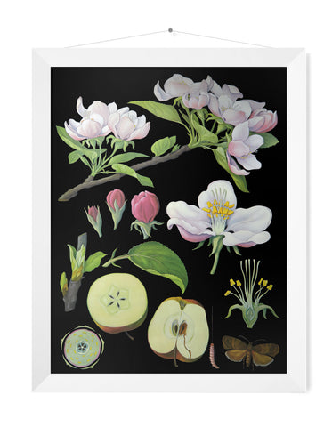 APPLE TREE  PRINT - SMALL