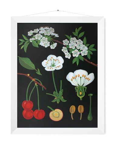 CHERRY TREE LITHOGRAPHIC PRINT - SMALL