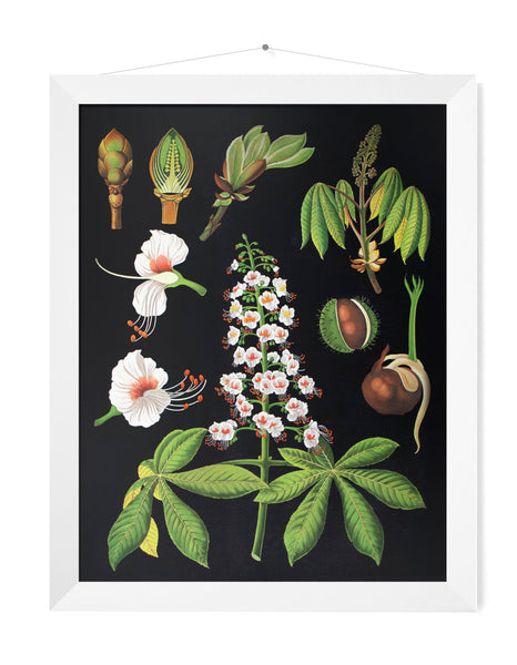 HORSE CHESTNUT PRINT - SMALL