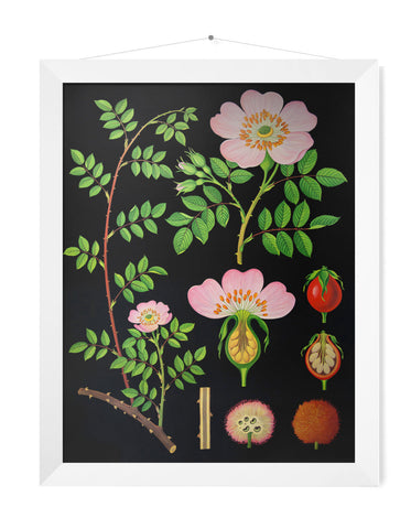 DOG ROSE PRINT - SMALL