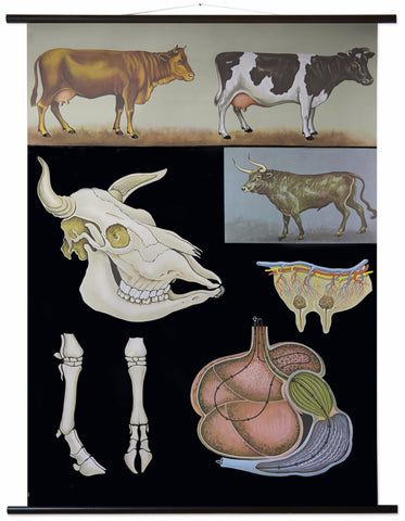 COW WALL CHART