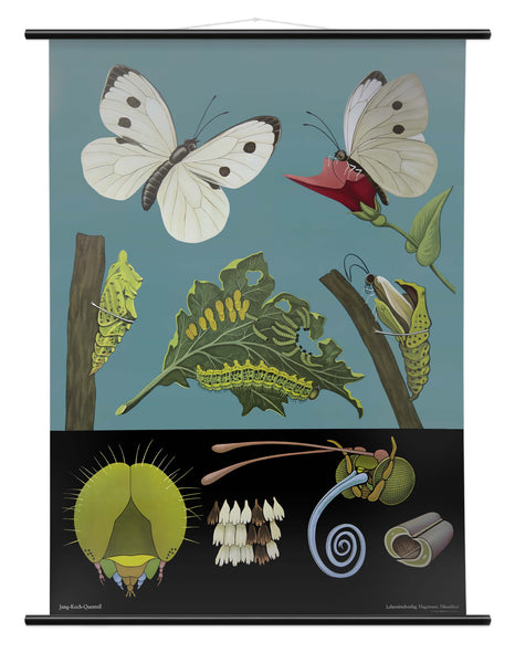 WHITE BUTTERFLY WALL CHART