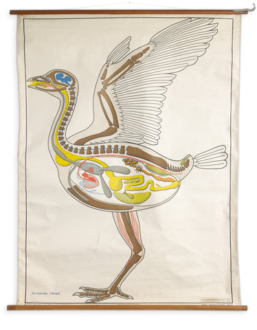 VINTAGE GERMAN LARGE BIRD WALL CHART