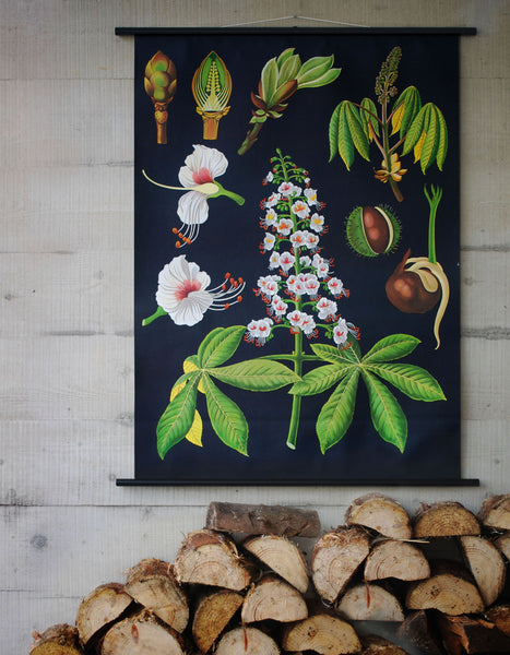 HORSE CHESTNUT WALLCHART