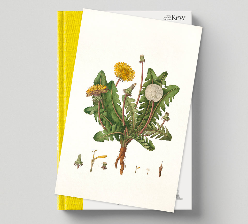 PRE-ORDER: Print (E) + Book: 'The Botanical City'