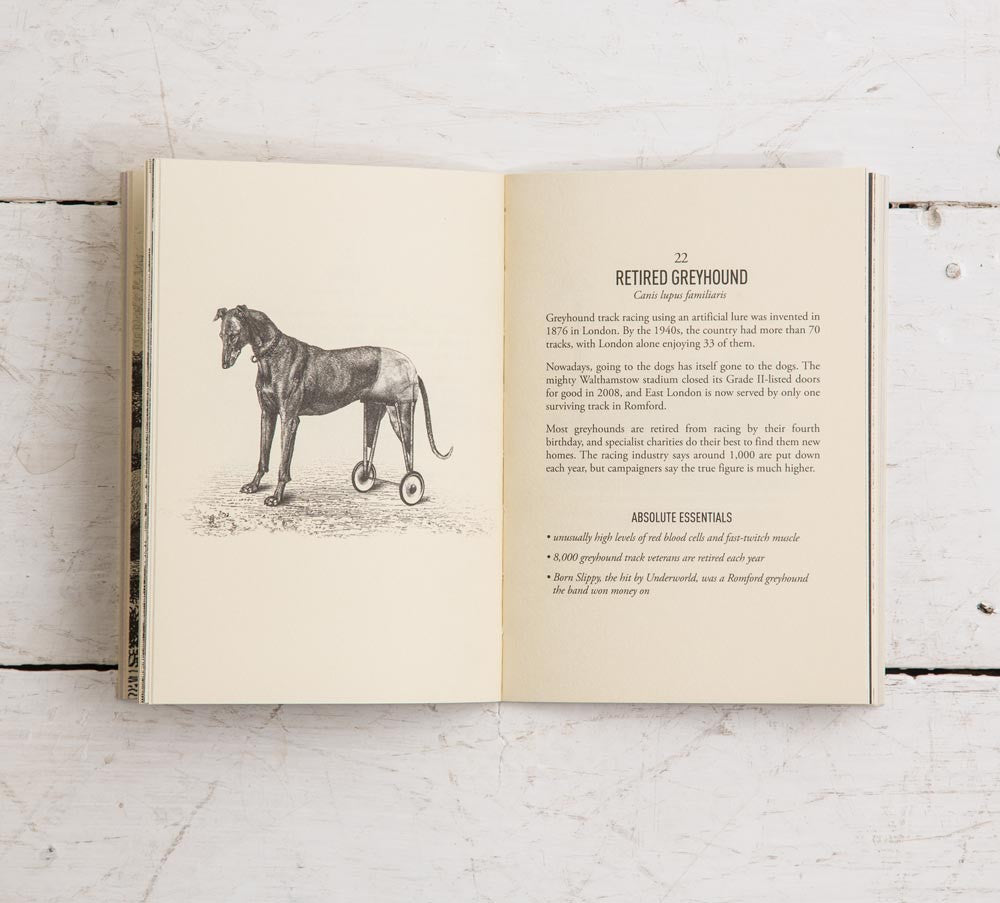Field Guides: Field Guide To East London Wildlife