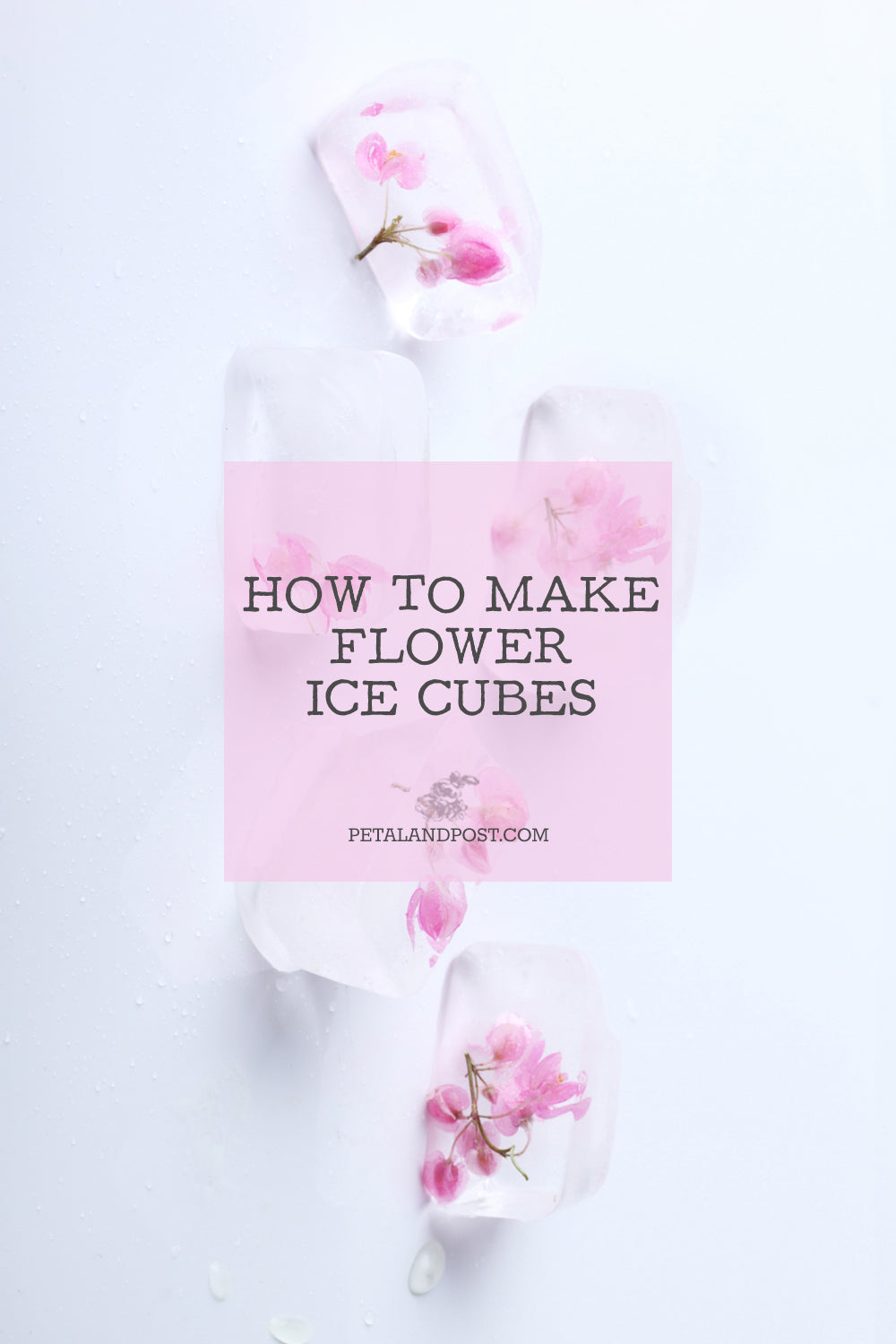 How to make floral ice cubes.