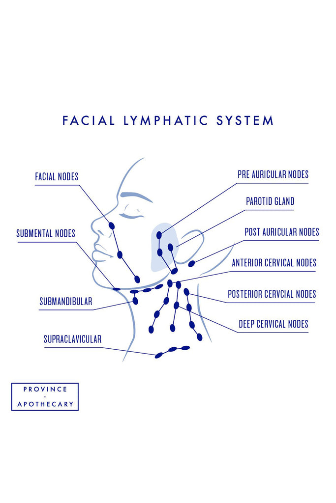 Dry Brush Facial Lymphatic System
